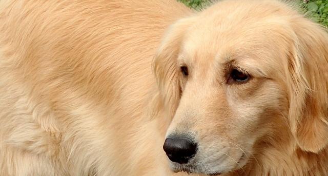 犬の散歩は1日3回? ペットに関する調査結果