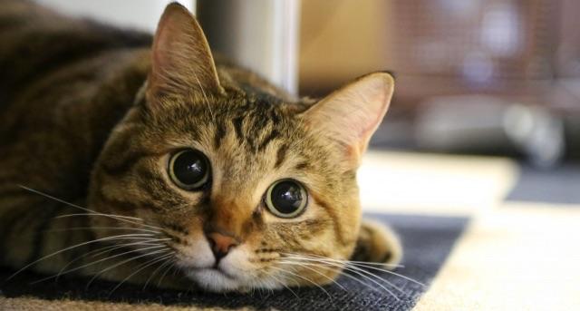 20代女性の4人に1人は猫カフェに行った経験あり | 猫カフェに関する調査結果